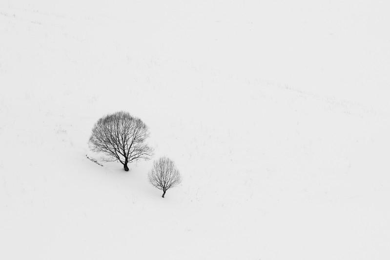 Two trees, Kars, Turkey