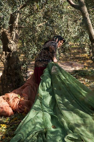 Moving the nets, Iznik, Turkey