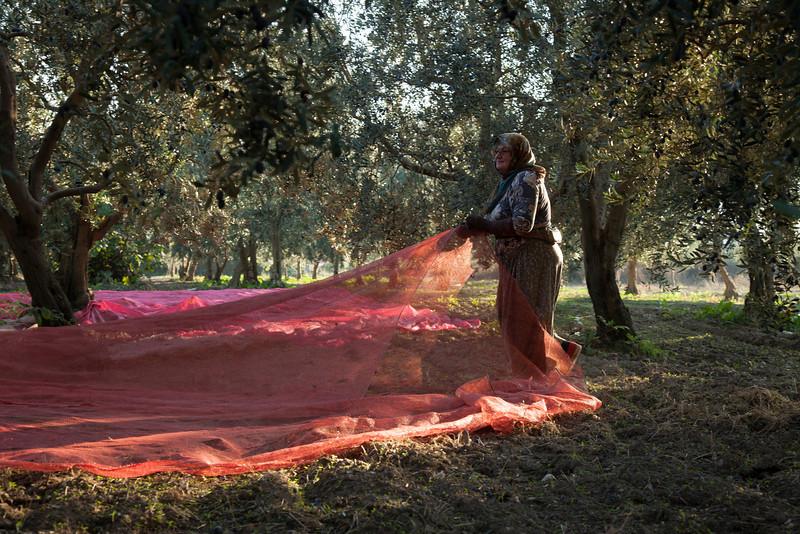 Spreading nets, Iznik, Turkey