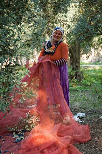 Gathering the olives, Iznik, Turkey
