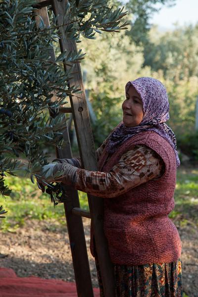 Picking, Iznik, Turkey