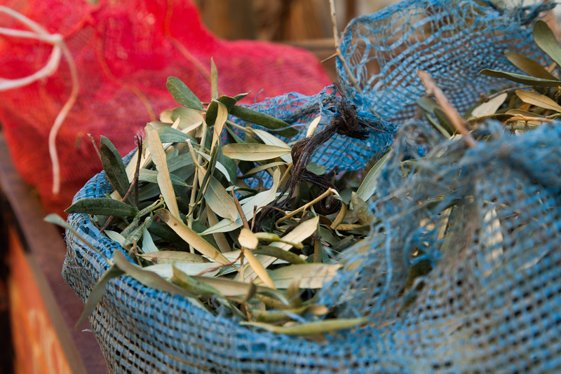 Olive leaves, Tacir, Iznik