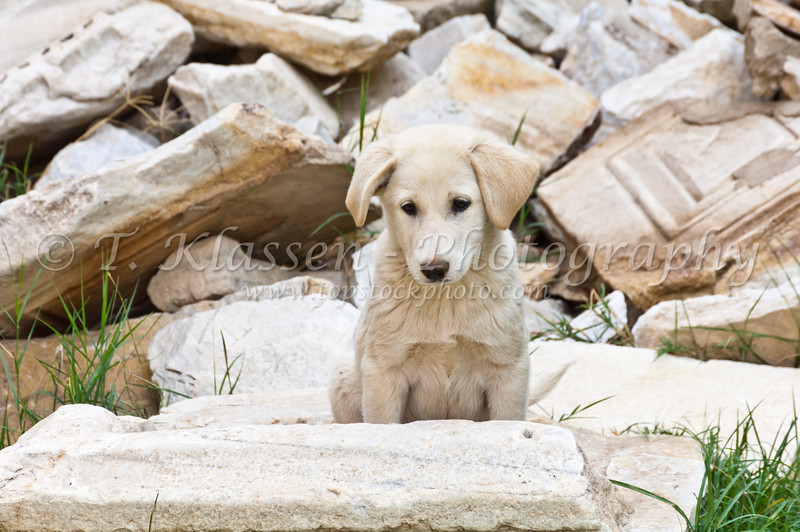 A small puppy dog in the ruins at the site of the former Christian church at Philadelphia, Turkey, Eurasia.