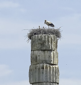 Stork nest with mamma and babies atop an ancient Greek column