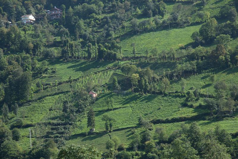 Tea plantations, Rize, Turkey