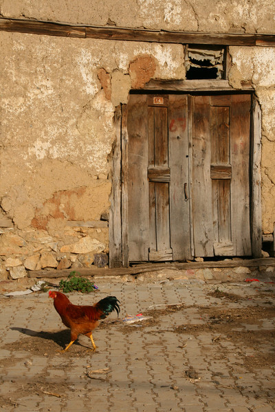 Chicken, Sansarak, Iznik, Turkey