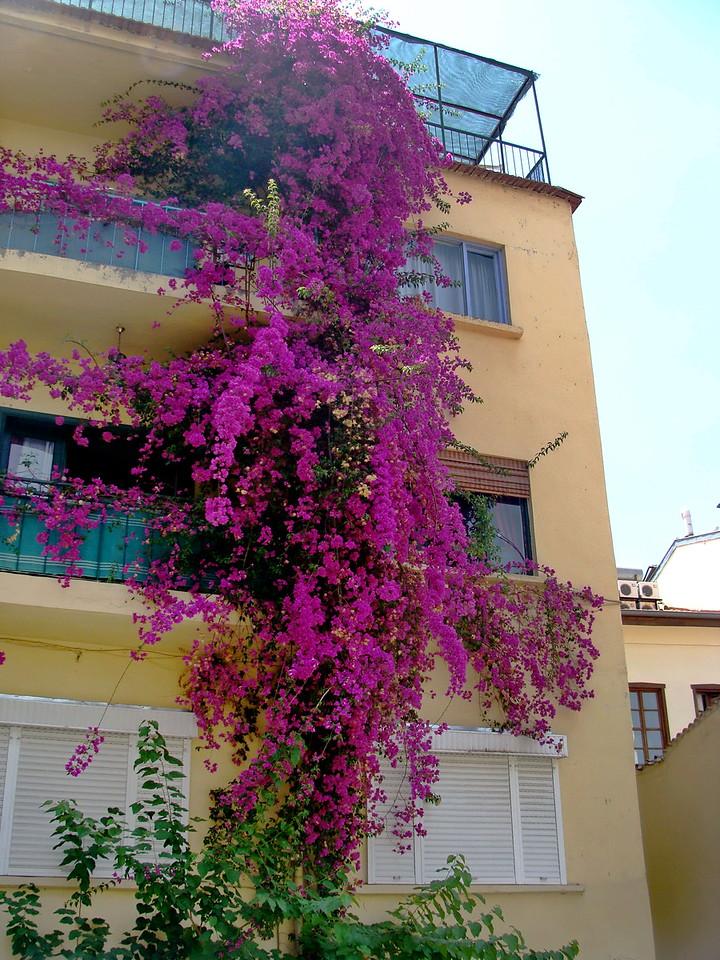 Pink Flower Cascade