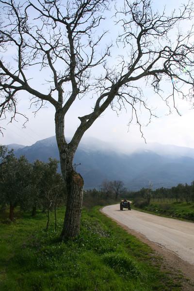 Tree and tractor, Iznik Lake, Turkey