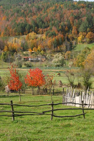 Autumn, Elmalı, Iznik, Turkey