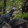 turkey      311