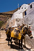 600+ steps from harbor to Fira, Santorini.  Mule anyone?