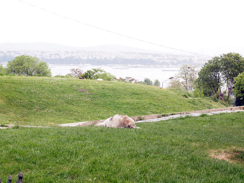 View of the Bosphorus from the grounds of Topkapi Palace