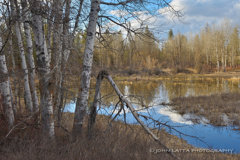 Vernal Wetland Surrounded by Aspen
