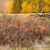 Details of Autumn
