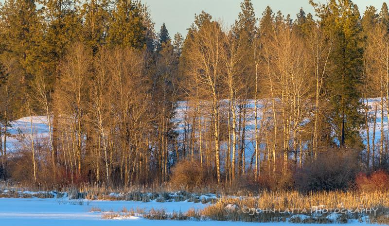 Evening Light, Late Winter