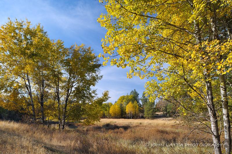 Aspen Fringed Meadow