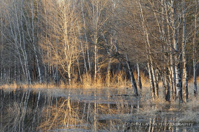 Magic Aspen Wetland