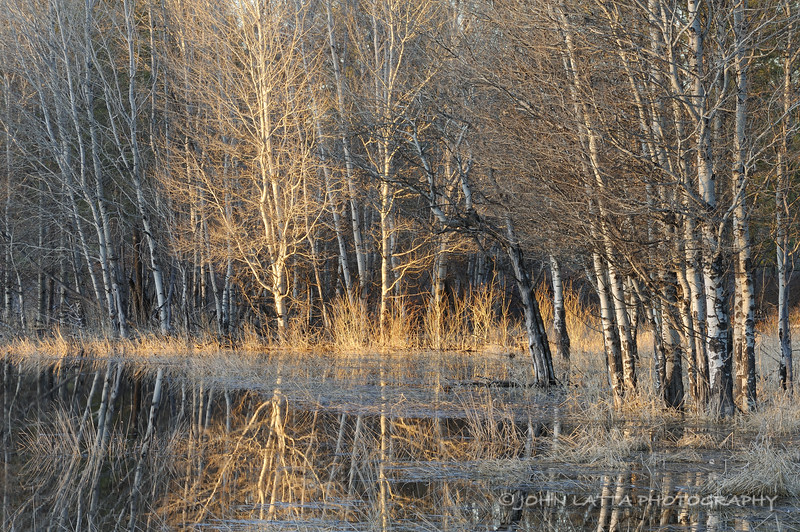 Magic Aspen Wetland