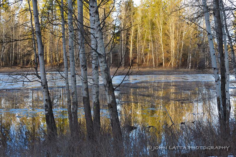 Vernal Wetland
