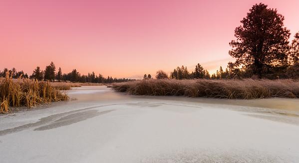 Frozen Pine Lake #2
