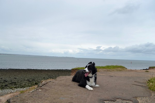 Turps our Border Collie