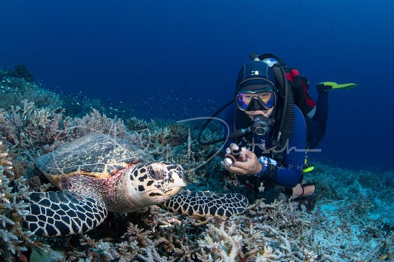 Hawksbill Turtle & Diver