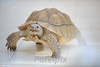 Our pet tortoise<br /> Englewood Cliffs <br /> New Jersey