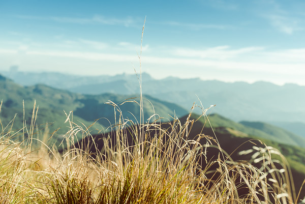 Grass and mountains