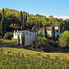 House in Tuscany and grape vines