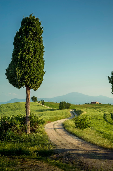 Road to Villa Terrapille; Pienza, Tuscany; Italy