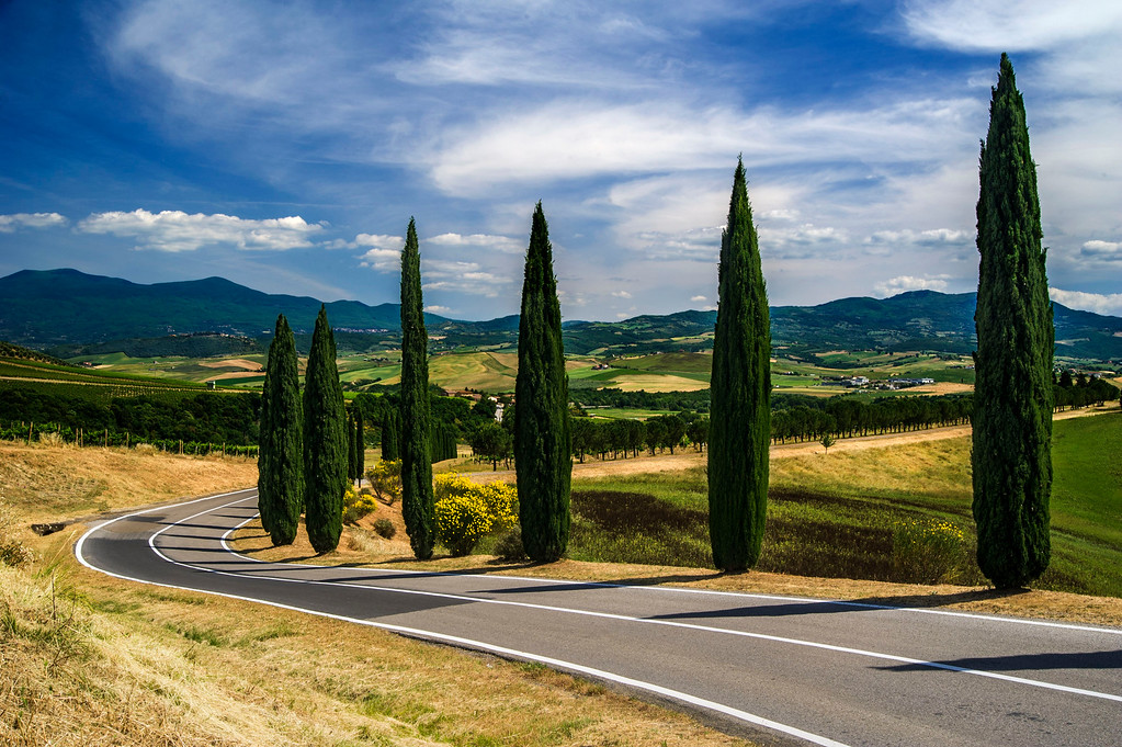 Winding road to Banfi castle; Cypress Trees; Tuscany; Italy