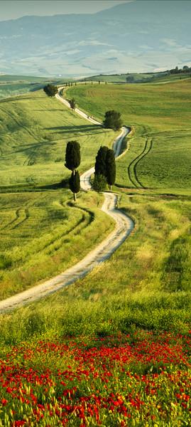 Road to Villa Terrapille; Pienza; Tuscany; Italy