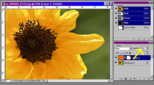 Finally, we can reduce the opacity of the layer to get the effect we want.  In this example, I lowered the opacity to 33%, which yielded a darker yellow with hints of orange instead of green.  Changing the tinting is easily accomplished by selecting a different fill color and reusing the paint bucket to fill the layer again.