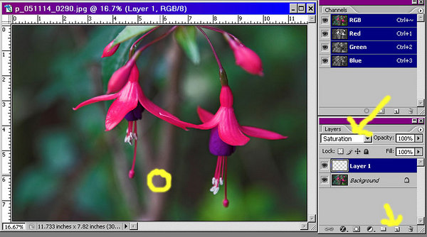 First, we create a new layer by clicking on the new icon on the layers palette and set the mode of the new layer to saturation.  We then use the eyedropper tool to sample a relatively unsaturated spot on the background.  The hue of this spot does not matter.  The sample was taken inside the yellow circle.