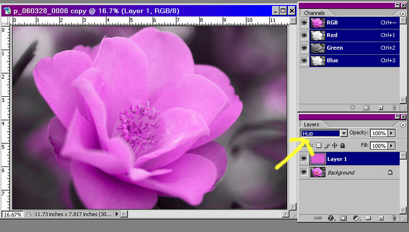 Add a new layer and set its mode to hue.  Then select a color and use the paint bucket tool to fill the layer.  I chose a mid-tone from one of the petals and got the result at right