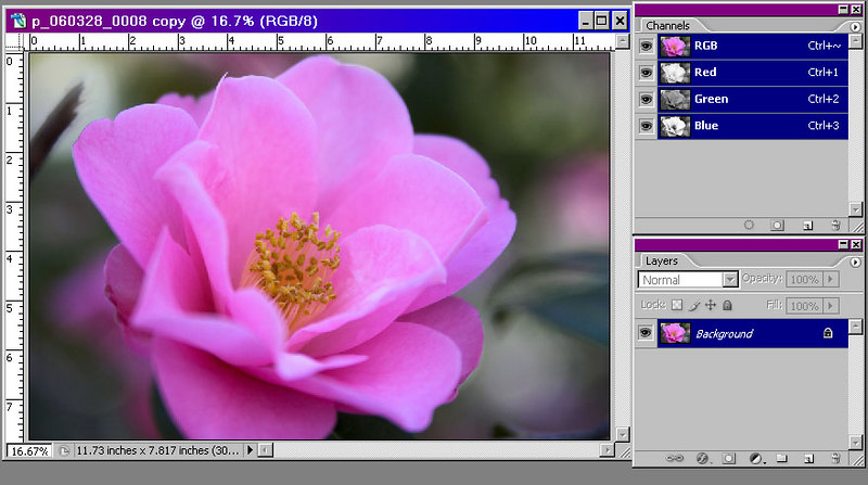 Hue mode lets you create a monotone in about 30 seconds.  We will demonstrate with the flower on the left.