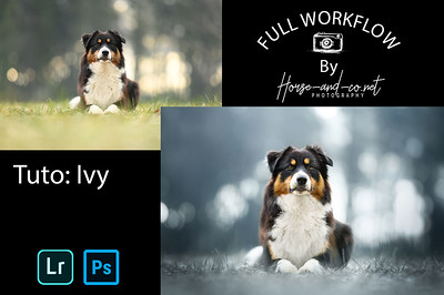 Tuto lightroom et photoshop photographie canine