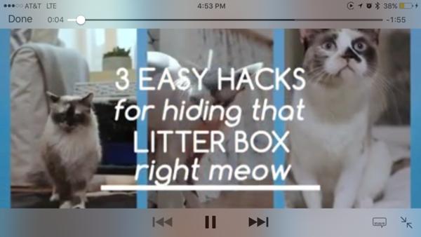 Tv movie camera cat work