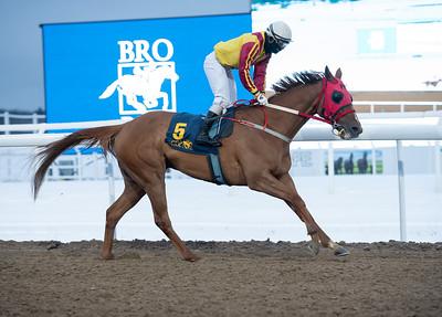 King Cole vinner med jockey Maikel Narvaez Bravo. Bro Park 210117 Foto: Elina Björklund / Svensk Galopp