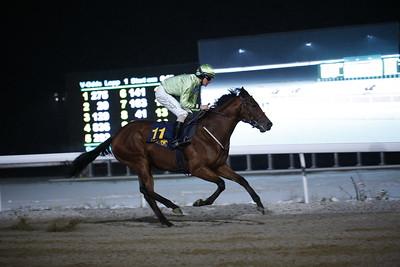 Kashgar vinner med Jacob Johansen  Bro Park 161108 Foto: Wolfram Meyer / Svensk Galopp