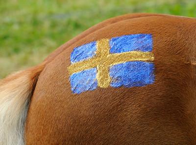Nationaldagspyntad ponny | Gärdet 140606 | Foto: Stefan Olsson / Svensk Galopp