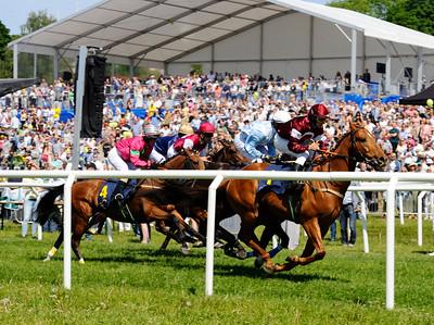 Hästarna passerar publikplats i lopp 1 | Gärdet 160606 | Foto: Stefan Olsson / Svensk Galopp
