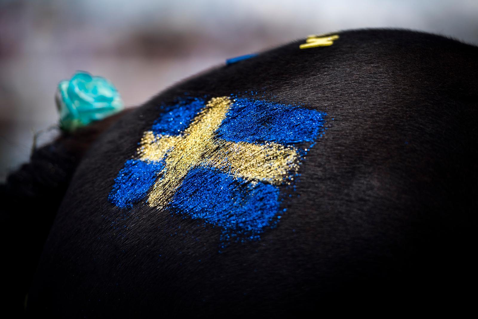 Gärdet / Nationaldagsgaloppen 170606 Foto: Elina Björklund / Svensk Galopp