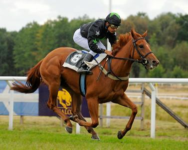 Allinornothing vinner under Carlos Lopez  | Göteborg 140817 | Foto: Stefan Olsson / Svensk Galopp