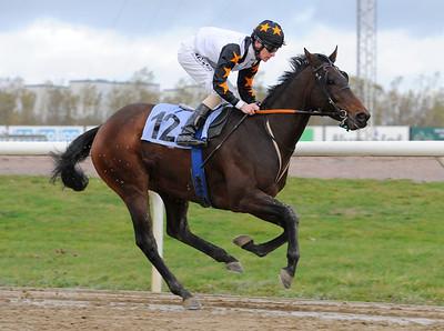 Awesome Delight vinner med Jacob Johansen | Jägersro 131030 | Foto: Stefan Olsson / Svensk Galopp