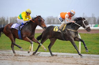 Avonbear vinner med Per-Anders Gråberg | Jägersro 131110 | Foto: Stefan Olsson / Svensk Galopp
