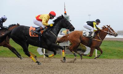 Spykes Bay och Iago Serry vinner före The Penny Horse och Cave Man | Jägersro 131127 | Foto: Stefan Olsson / Svensk Galopp