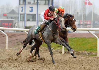 Buzzbird och Iago Serry vinner Skånelandlöpning före Duke Derby | Jägersro 131127 | Foto: Stefan Olsson / Svensk Galopp