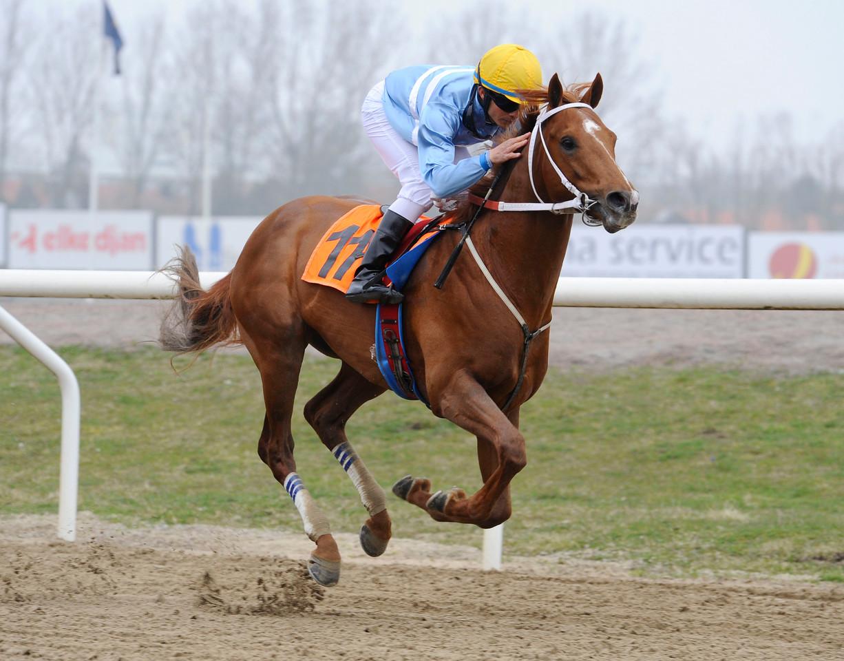 Achatino vinner med Valmir De Azeredo   Jägersro 140406   Foto: Stefan Olsson / Svensk Galopp