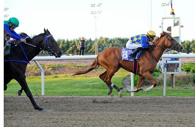 Medicean's Miracle vinner med Elione Chaves   Jägersro 150828   Foto: Stefan Olsson / Svensk Galopp